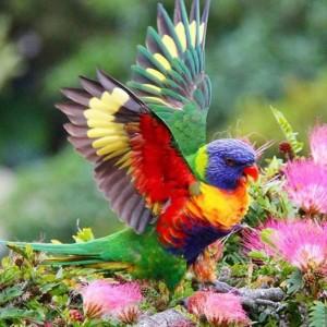 BirdPrettyWings